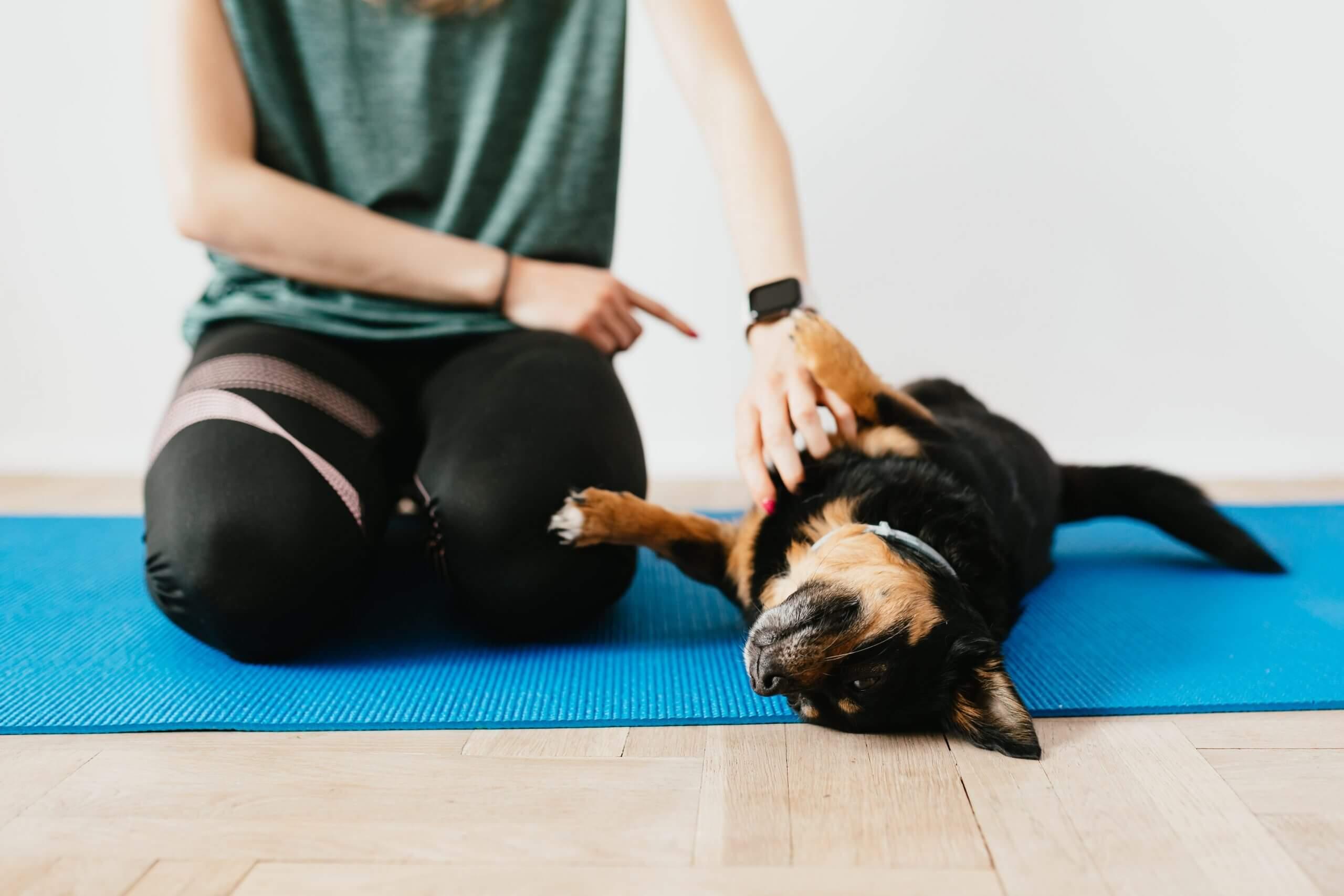 Leto – ideálny čas na výcvik psa